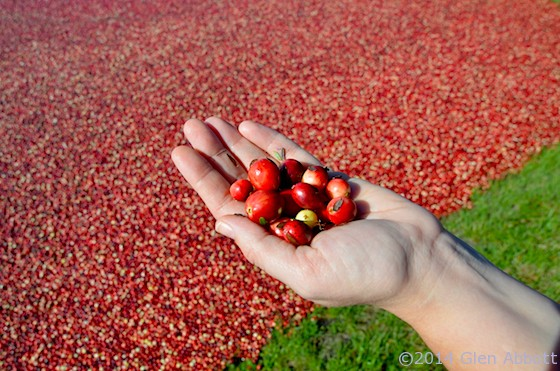 WI cranberries